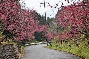 ❀今年もお花見の季節が近づいて来ました!!❀ 写真